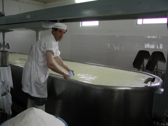 making of the famous Sao Jorge Cheese