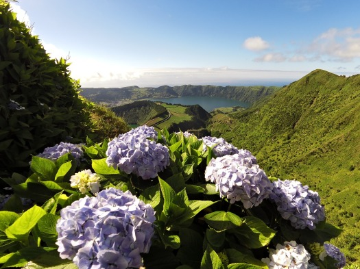 the azores flora.jpg